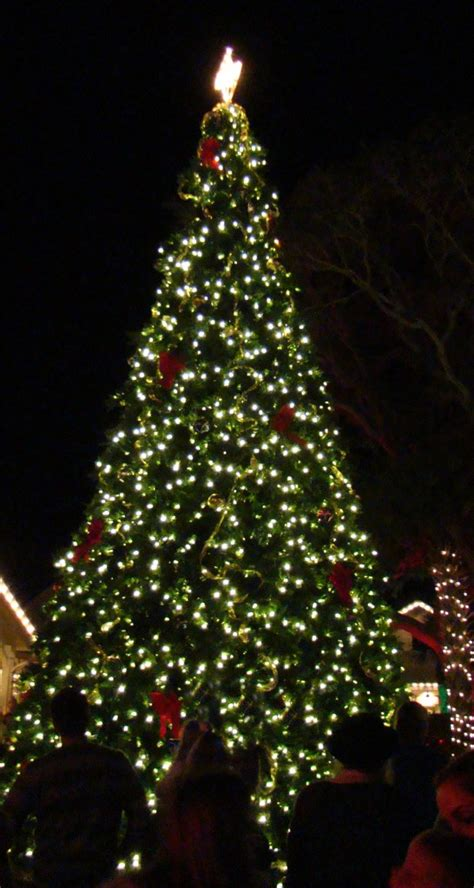annual holiday celebration amelia island christmas tree