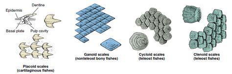 osteichthyes bony fishes fishes  diversity