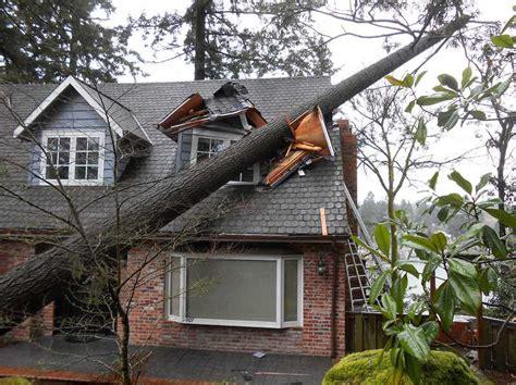 home insurance      neighbors tree