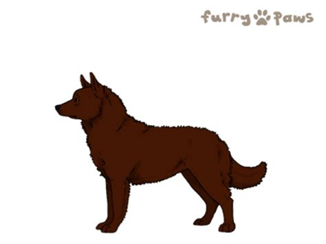 furry paws dog breed colors mudi colors