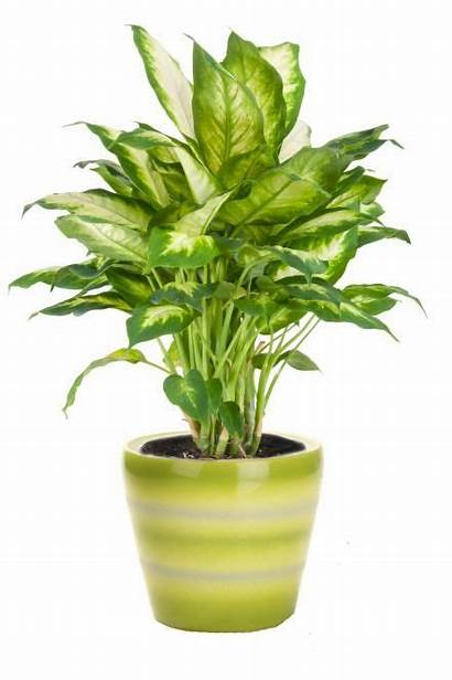 Plants Indoor Low Houseplants Inside Plant Hgtv
