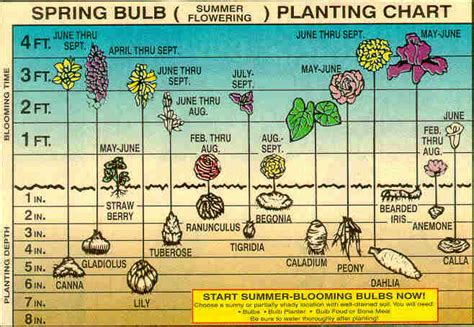 plant bulbs for early color
