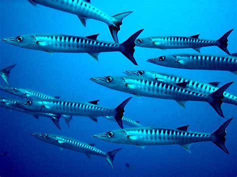 barracuda networks cuda jmp securities