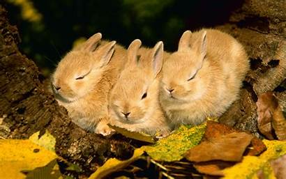 Sleeping Bunnies Funny Animals Rabbit Rabbits Wallpapers