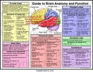 Brain Anatomy Diagram On HealthFavo.Com - Health, Medicine ...