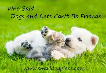 dogs  cats living   advice