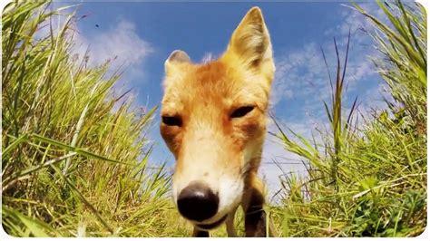 GoPro Animals