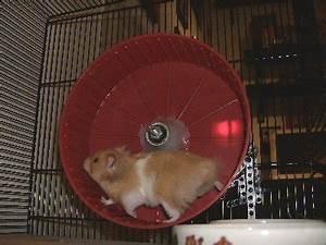 Umdrehungen Berechnen : hamster meter ~ Themetempest.com Abrechnung