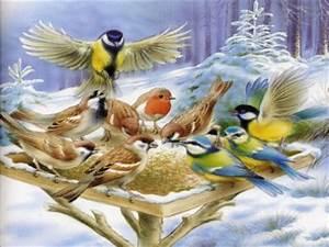 Graines Oiseaux Du Ciel : graines et accesoires pour les oiseaux du ciel ~ Melissatoandfro.com Idées de Décoration