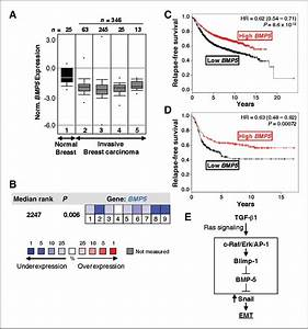 Epithelial-to-Mesenchymal Transition Induced by TGF-β1 Is ...