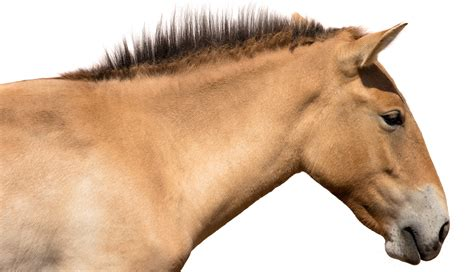Old Horse Colic Remedy Best Image Konpax 2018