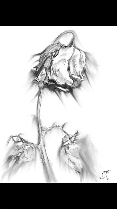 Fading Dead Rose | Roses drawing, Rose drawing, Rose sketch