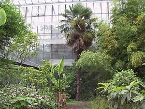 Hanfpalme Braune Blätter : chinesische hanfpalme ~ Lizthompson.info Haus und Dekorationen
