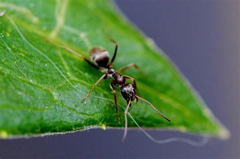 Come eliminare le formiche dall orto giardini e campi Sherena srl