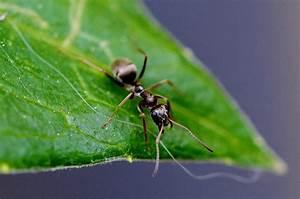 Come eliminare le formiche dall'orto giardini e campi