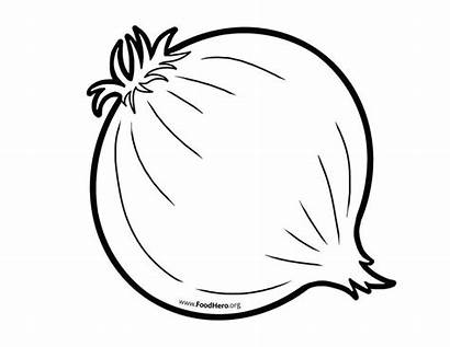 Onion Outline Clipart Drawing Line Onions Vegetable