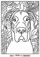 Dane Coloring Pages Danes Moose Drawings Colour sketch template