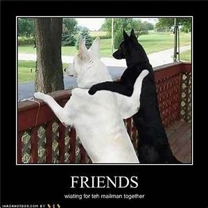 Quotes About Life Funny Dog. QuotesGram
