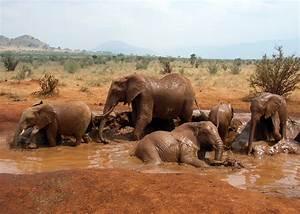 Beautiful African Animals Safaris: July 2012