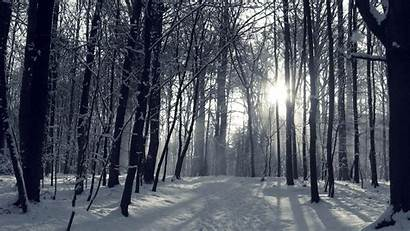 Forest Winter Night 1080p Outdoors 1080 Wallpapers