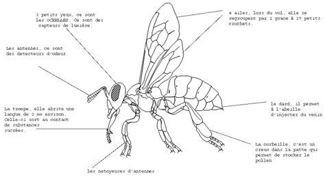 schema d une le sch 233 ma abeille