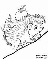 Hedgehog Coloring Autumn Animals Sheet sketch template