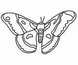 Moth Coloring Cecropia Template Designlooter Connected Maker Lines Software Program Were Unique sketch template