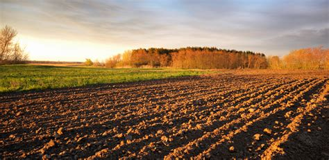 business  soil opportunities  challenges