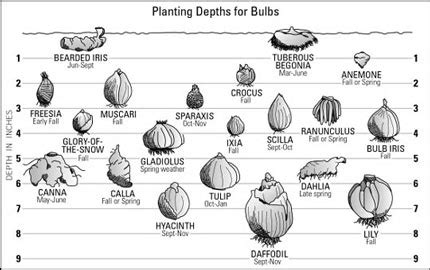 check out this nifty guide for planting bulbs how