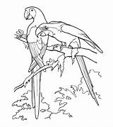 Parrot Coloring Pages Printable Realistic Cute Parakeet Animals Cockatoo Toddler Bird Momjunction Animal Popular sketch template