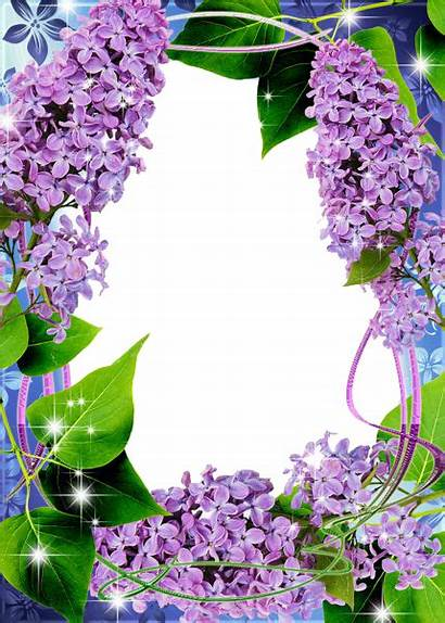 Transparent Lilac Frame Frames Borders Flower Backgrounds