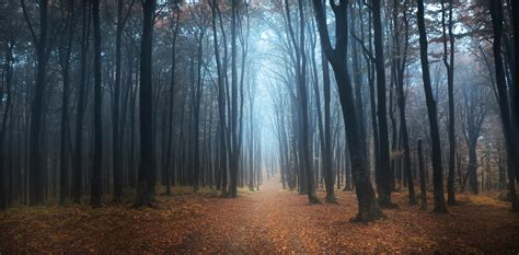 Bosque Negro Descarga Fotos Gratis De Increíbles Paisajes