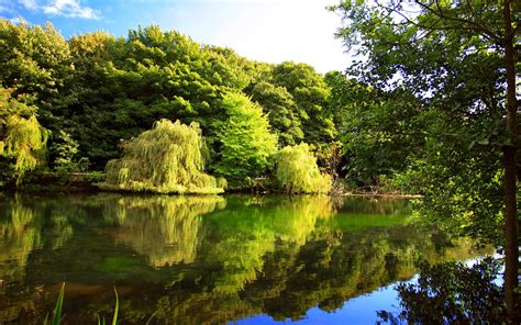 Green Forest Picture by Beautiful Green Forest And Lake Wallpapers Hd Desktop