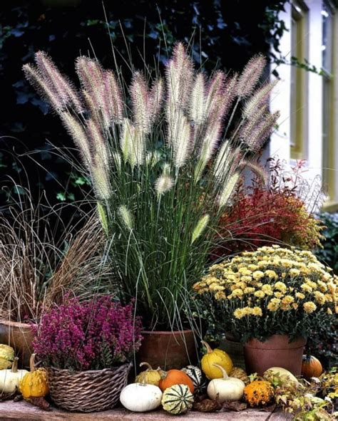 Topfpflanzen Für Den Garten by Ziergr 228 Ser Im Topf F 252 R Terrasse Und Balkon Garten