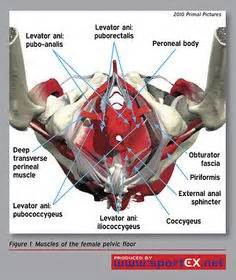 pelvic floor spasm and hypertonic pelvic muscles