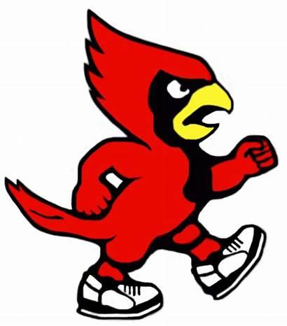 Cardinal Mascot Clipart Cardinals Louisville Clip Baseball
