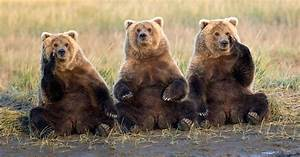 Why Katmai National Park Is Holding  U2018fat Bear Week U2019