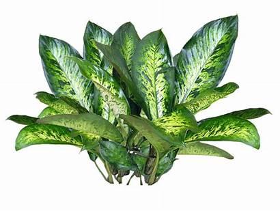 Plants Plant Transparent Texture Flower Background Jacey