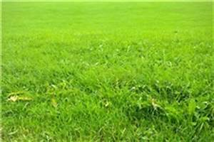 Rasen Vertikutieren Zeitpunkt : richtig rasen vertikutieren unsere anleitung ~ Orissabook.com Haus und Dekorationen
