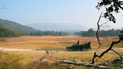 samode safari lodge bandhavgarh national park majestic resorts