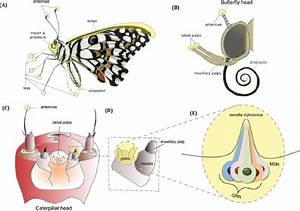 Body Parts Of A Caterpillar