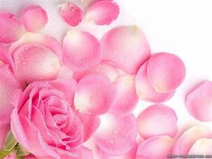 Pink Rose Flower Wallpapers - Wallpaper Cave