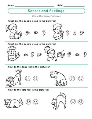 Senses And Feelings  Worksheet Educationcom