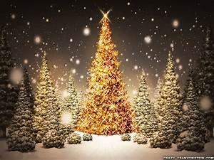 Christmas Trees - Christmas Wallpaper (17756627) - Fanpop