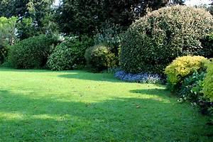 Welche Pflanzen Eignen Sich Als Sichtschutz : lweide als hecke so pflanzen und pflegen sie sie richtig ~ Sanjose-hotels-ca.com Haus und Dekorationen