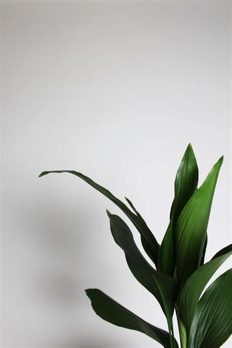 white aesthetic plants wallpapers