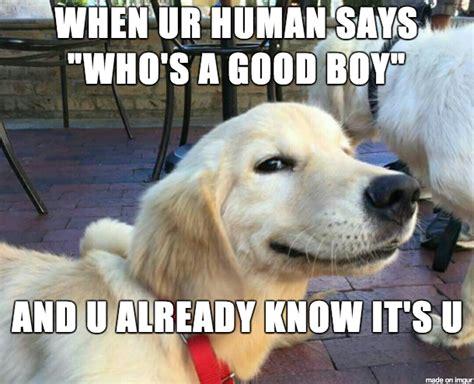 Good Boy Memes - the trifecta of suck sassy jack