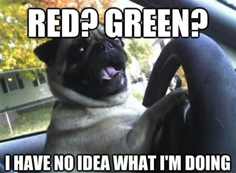 Funny Pug Memes - 20 hilarious pug memes will make your day