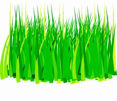 Cultivation Field Clipart Paddy Clipground Grass