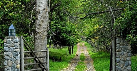 Free Nature Backgrounds by Wallpaper Proslut Road Jungle Nature Hd Wallpapers For